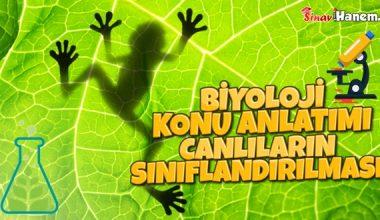 Canlıların Çeşitliliği ve Sınıflandırılması | Biyoloji Konu Anlatımı